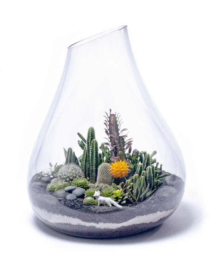 Cactus Terrarium In A Unique Glass Shape