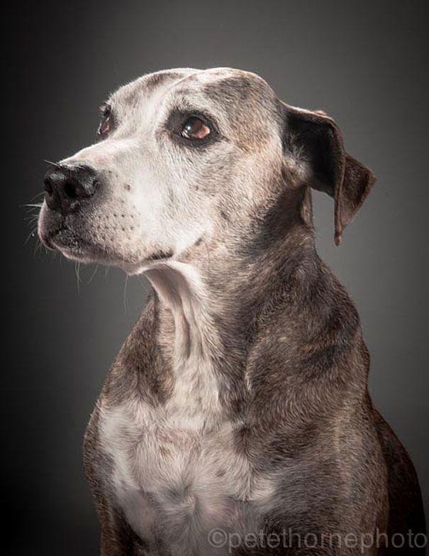 Fotógrafo captura retratos de cachorros idosos