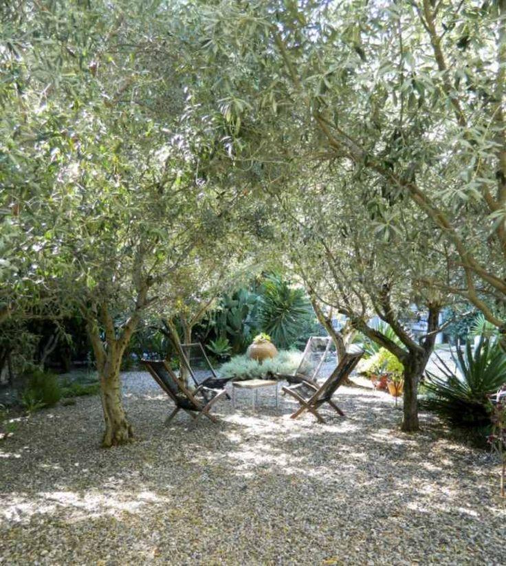 die besten 25 mediteraner garten ideen auf pinterest mediterraner garten ziergr ser und. Black Bedroom Furniture Sets. Home Design Ideas