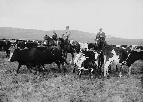The Prince of Wales helping with the cattle roundup at the Bar-U Ranch near High River, Alberta, September 1919 / Le prince de Galles en train d'aider au rassemblement du troupeau, au ranch Bar-U, près de High River, en Alberta, septembre 1919 | by BiblioArchives / LibraryArchives
