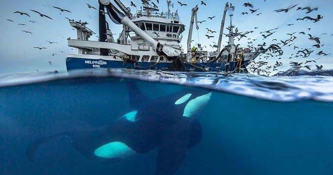Καθηγητής βιολογίας απαθανατίζει τις φάλαινες της Αρκτικής σε εντυπωσιακές φωτογραφίες
