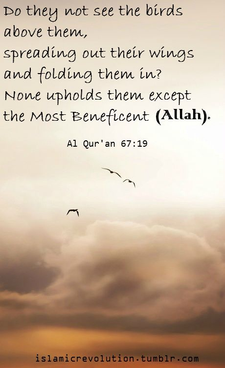 islamicrevolution:    Do they not see the birds above them, spreading out their wings and folding them in? None upholds them except the Most Beneficent (Allah). [Al Qur'an 67:19]