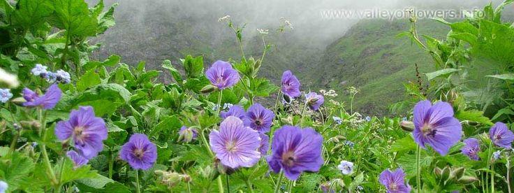 Valley_of_flowers9.jpg (960×361)