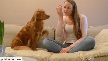 Gossiping With A Dog