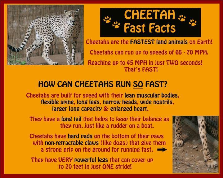 cheetah habitat project for kids - Google Search