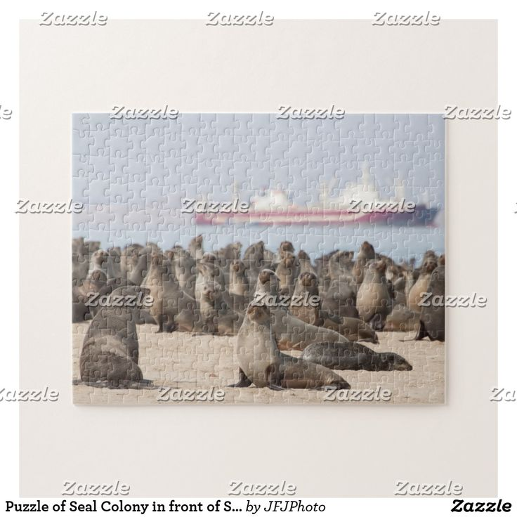 Puzzle of Seal Colony in front of Ship