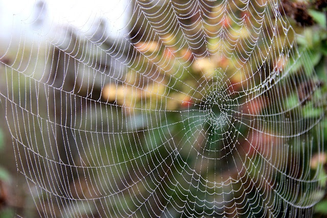 The tangled web!:  Spiders Web, Tangled Web