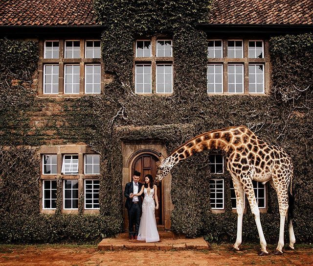 That One Day A Giraffe Joined Our Portrait Session Cxrpreset