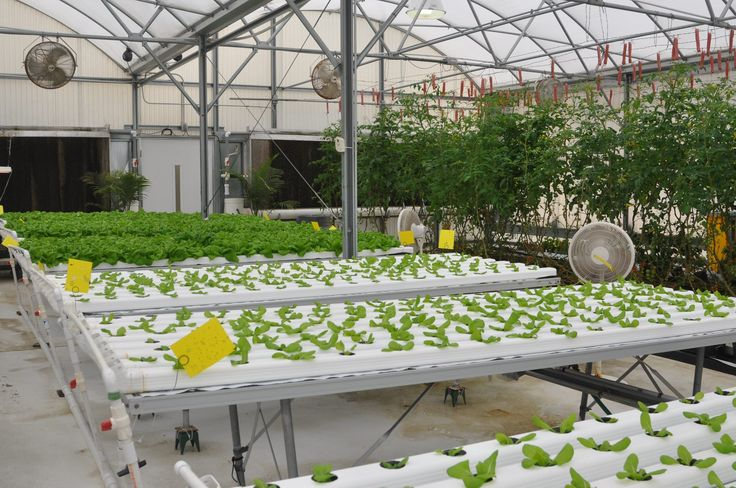 17 Best Images About Self Sustaining Aquaponics On