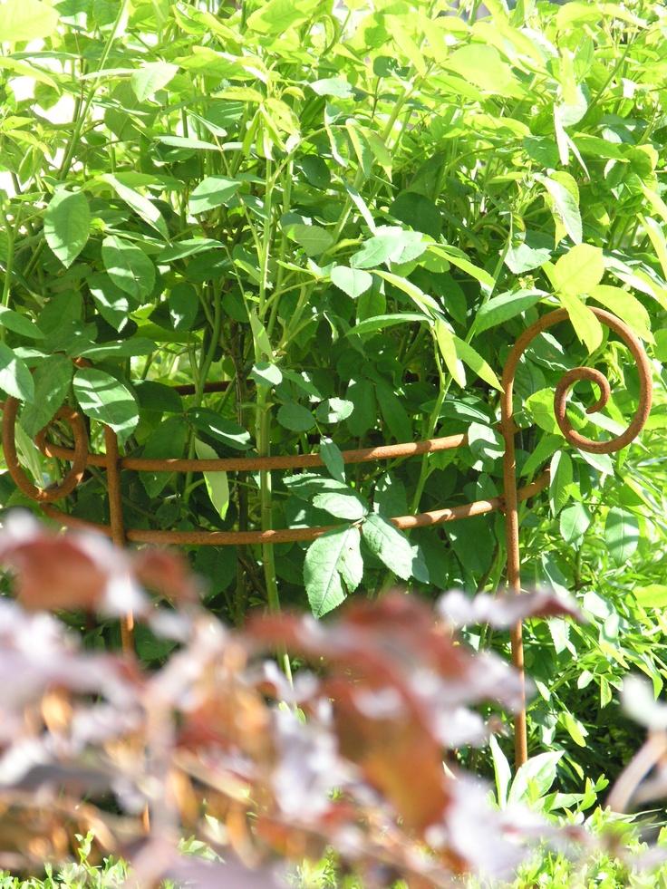 Staudenfreund im GARTENBIJOUX-Showgarten. http://www.gartenbijoux.ch/cms/webshop/staudenfreunde.html