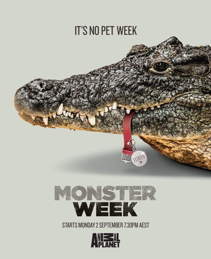 """犬を丸呑みしたワニ? 見る人の想像力を刺激するプリント広告. オーストラリアのシドニーで、ディスカバリーチャンネルの「アニマルプラネット」という番組用に制作されたプリント広告。  同番組が「モンスターウィーク」という猛獣特集を告知するために生み出したクリエイティブは、非常にインパクトのあるものでした。そのビジュアルがこちらです。   ワニの寄りのショット。 「FLUFFY」と名前が刻印されていることからも分かる通り、咥えているのは食べられてしまったであろう犬の首輪です。  コピーは以下の通り。  """"It's no pet week. Monster Week."""" (ペットウィークではありません。モンスターウィークです。)  コピーとビジュアルのかけ算がおもしろい、見る人の想像力で完成するプリント広告"""