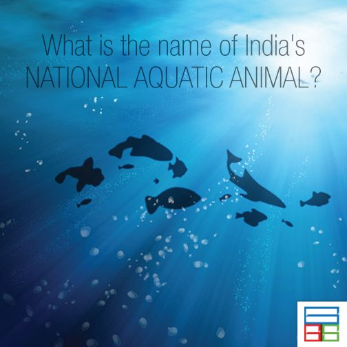 They are called Gangatic Dolphins. #Quiz #Kids #Knowledge #Brain #GK