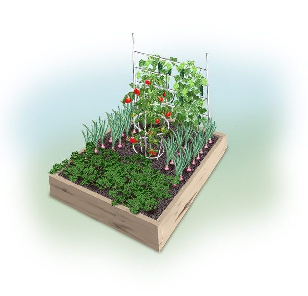 Illustration Of A 4x4 Tabouli Garden.