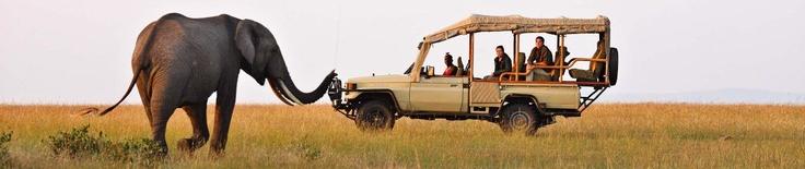 kenya safari? http://www.go2africa.com/location/226/why-go/kenya