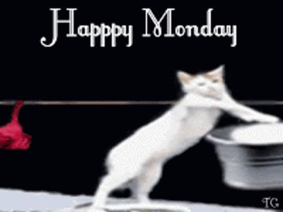 Happy Monday funny day monday days of the week weekdays i hate mondays