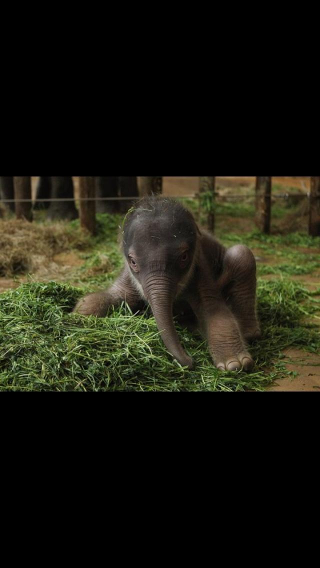 Baby Elephant (HuffPost Green via Reddit)
