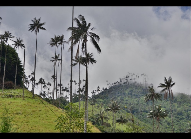 Valle del #Cocora - #Colombia One of the most impressive hiking day of my life