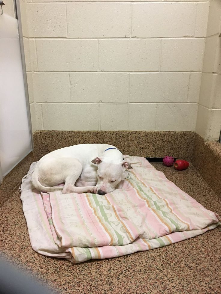 Thomas J OConnor Animal Control And Adoption Center Page Liked January 13 13Home DepotAdoption