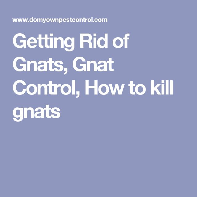 Getting Rid of Gnats, Gnat Control, How to kill gnats
