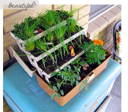 Tacklebox herb garden. CUTE!