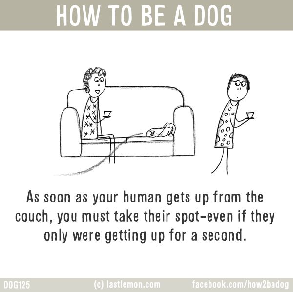 HOW TO BE A DOG: As soon as your human gets up from the couch, you must take their spot-even if they only were getting up for a second.