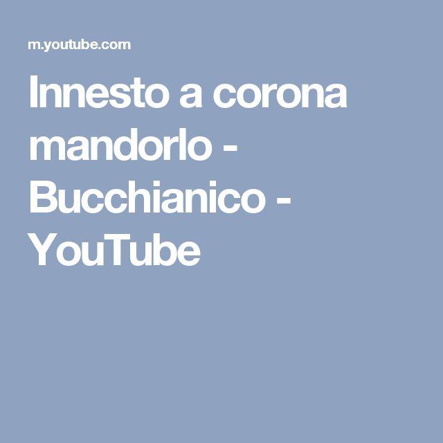 Innesto a corona mandorlo - Bucchianico - YouTube