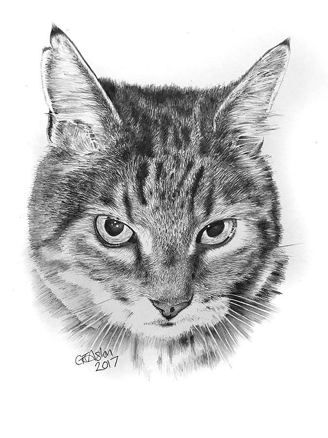 This pencil portrait of a cat was recently completed and I'm super happy with the result. A decent photograph can make the difference of a good drawing and a great drawing.