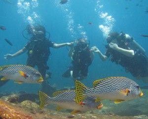 Lima Situs Diving Wajib Diselami di Bali   Sudah diakui, Pulau Bali adalah salah satu tempat di Indonesia yang memiliki situs menyelam kelas dunia. Dimulai dari situs kapal karam di Tulamben, titik mola-mola di Nusa Penida, hingga candi buatan dengan kehidupan laut yang berwarna-warni dan suhu airnya yang hangat.