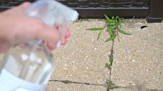 Votre jardin et pots de fleurs sont envahis par les mauvaises herbes ? Certes, les désherbants du commerce sont efficaces mais ils sont littéralement bourrés de produits chimiques. Pas top pour ...