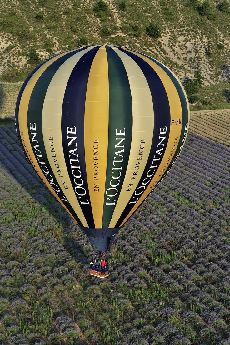 Atterissage d'une montgolfière au milieu d'un champ de lavande