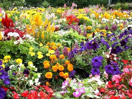 Blumen für den Garten-Gestaltung ideen – #blumen #den #für #Gartengestaltung #…