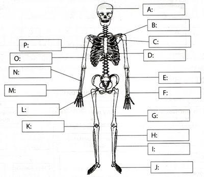 16 Best Anatomy 101 Images On Pinterest I Want Medicine And Massage