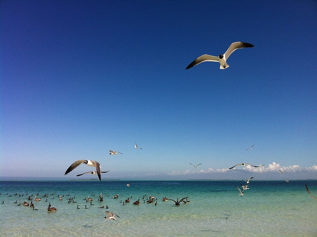 Is South Or North Anna Marie Island Best