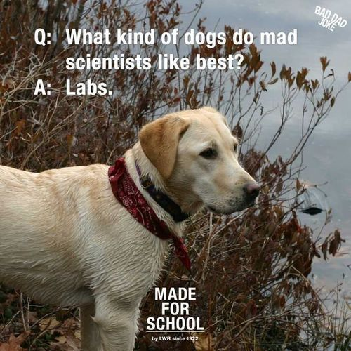 What mind of dogs do mad scientists like? #science #humor #STEM