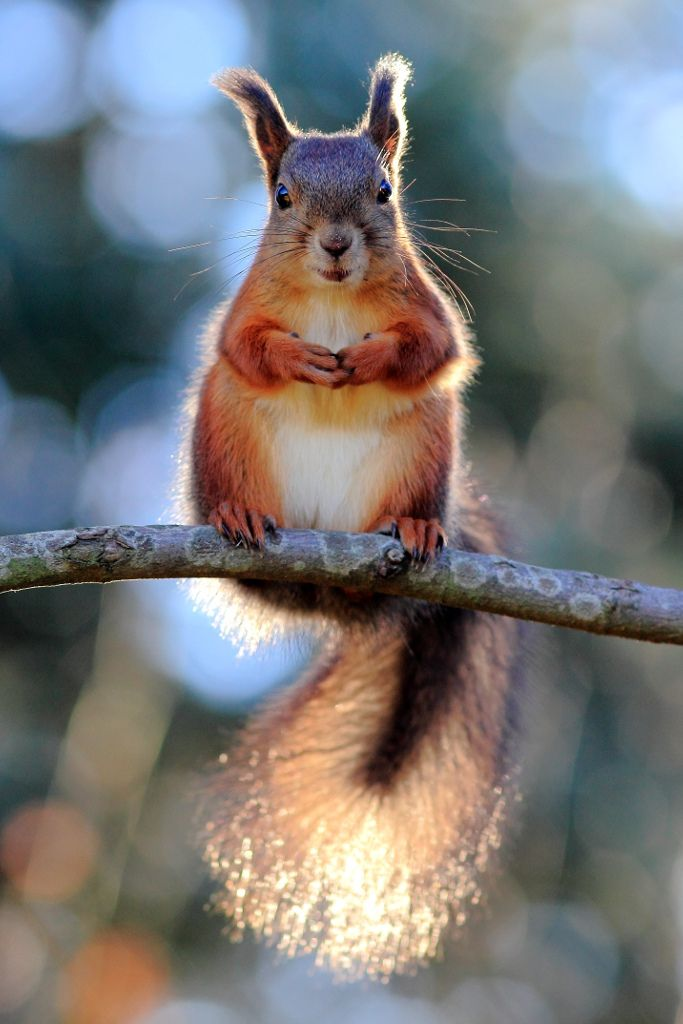 """ Revenge is like biting a squirrel cuz deh squirrel bit yoo. Chitter-hah ! """