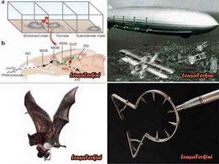 10 Senjata Perang Paling Unik yang Pernah Diciptakan Manusia