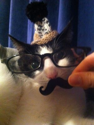 Oh whatever....: Cutestpaw Term, Animal Pictures, Cat, Cutest Paw, Animals Pet, Funny Stuff, Mustache Kitty, Animal Pet, Neener Stuff