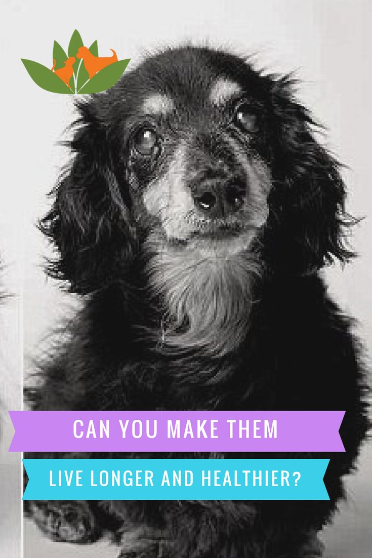 Cancer herbs for dogs - Can You Help Your Dog Live Longer And Healthier Well We Can Only Try