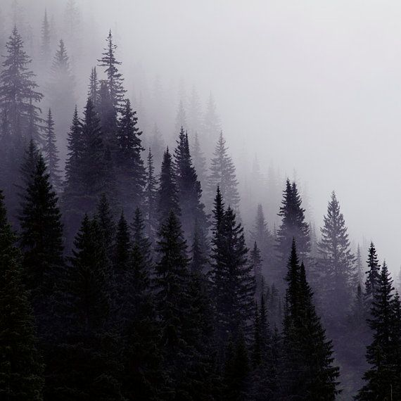 Nature Photography, Mountain Photography, Trees in Mist ...