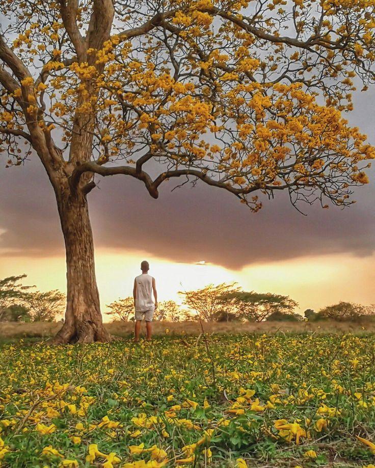 Un fantástico capture de un mágico atardecer en mi tierra #chinu #atardecer #idcolombia #idcol_jesuflorez #colombia #chinu #cordoba