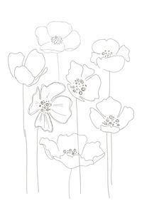 how to draw a poppy for kids