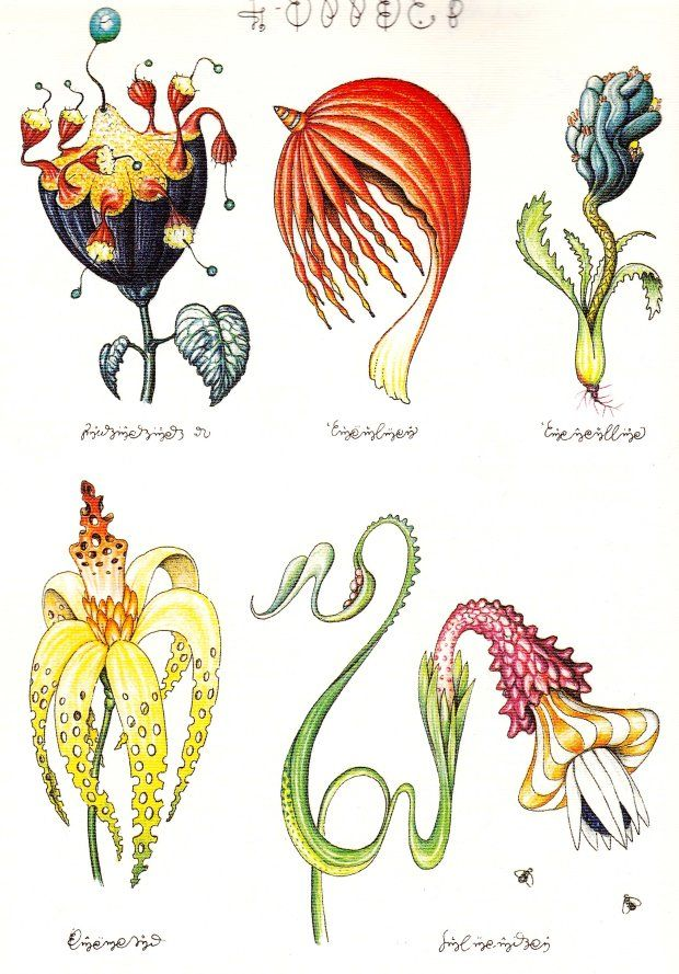 plants5 codex seraphinianus