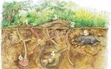 Kompostwürmer ernähren sich von organischen Abfällen und stellen daraus Wurmkompost her, einen wertvollen Biodünger. In einem Wurmkomposter, der sogenannten Wurmkiste, kann man die Tiere ganz einfach für sich arbeiten lassen – sogar auf dem Balkon!Kompostwürmer ernähren sich von organischen Abfällen und stellen daraus Wurmkompost her, einen wertvollen Biodünger. In einem Wurmkomposter, der sogenannten Wurmkiste, kann man die Tiere ganz einfach für sich arbeiten lassen – sogar auf dem Balkon!