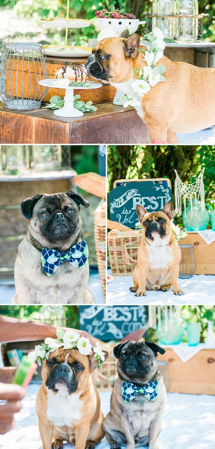 best dogs weddings ud love images on pinterest wedding dogs