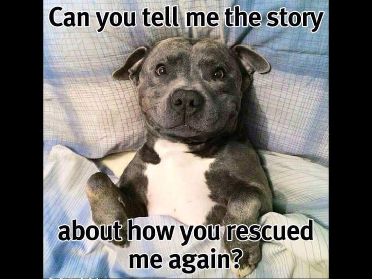 Cute Rescue Dog Quotes