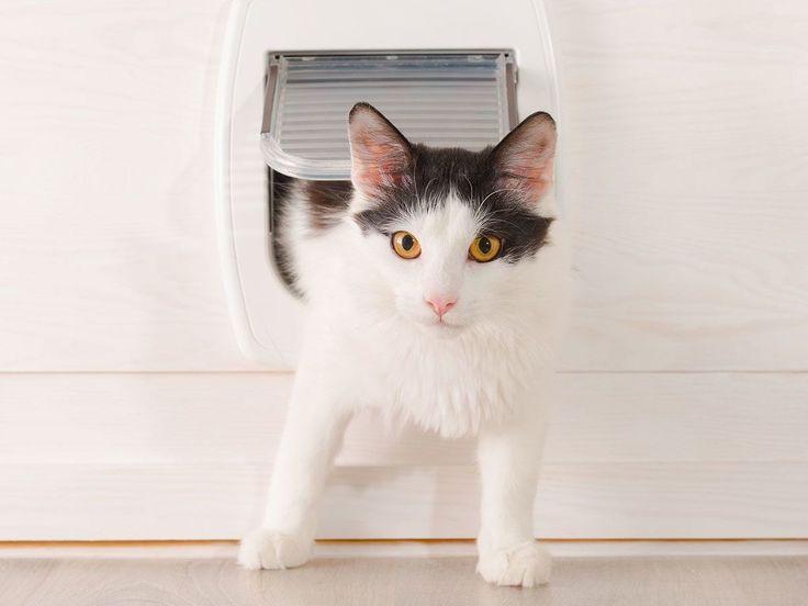 Первую дверь для кошки придумал Исаак Ньютон