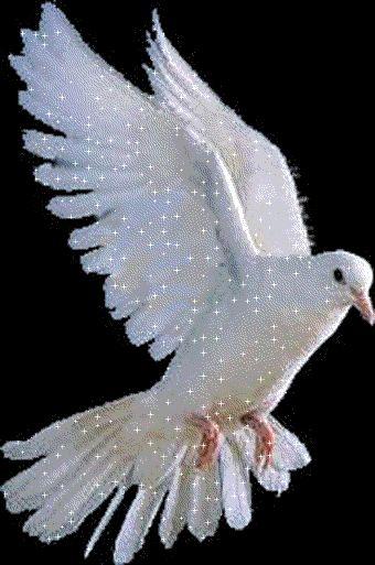 Живые картинки с голубями