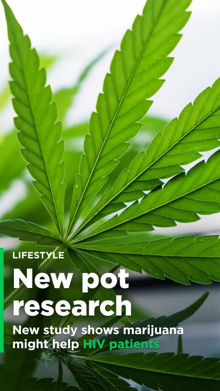 The stereotypical pot user isn't exactly known to be mentally sharp, but new research has found that the drug might do just that — for HIV patients, at least. That's the takeaway from a new study published in the journal AIDS that found that tetrahydrocannabinol (THC) may help slow mental decline in people with HIV. Mental decline is a big concern for people with HIV — it affects up to 50 percent of patients with the disease, lead study author Norbert Kaminski, a professor of pharmacology…