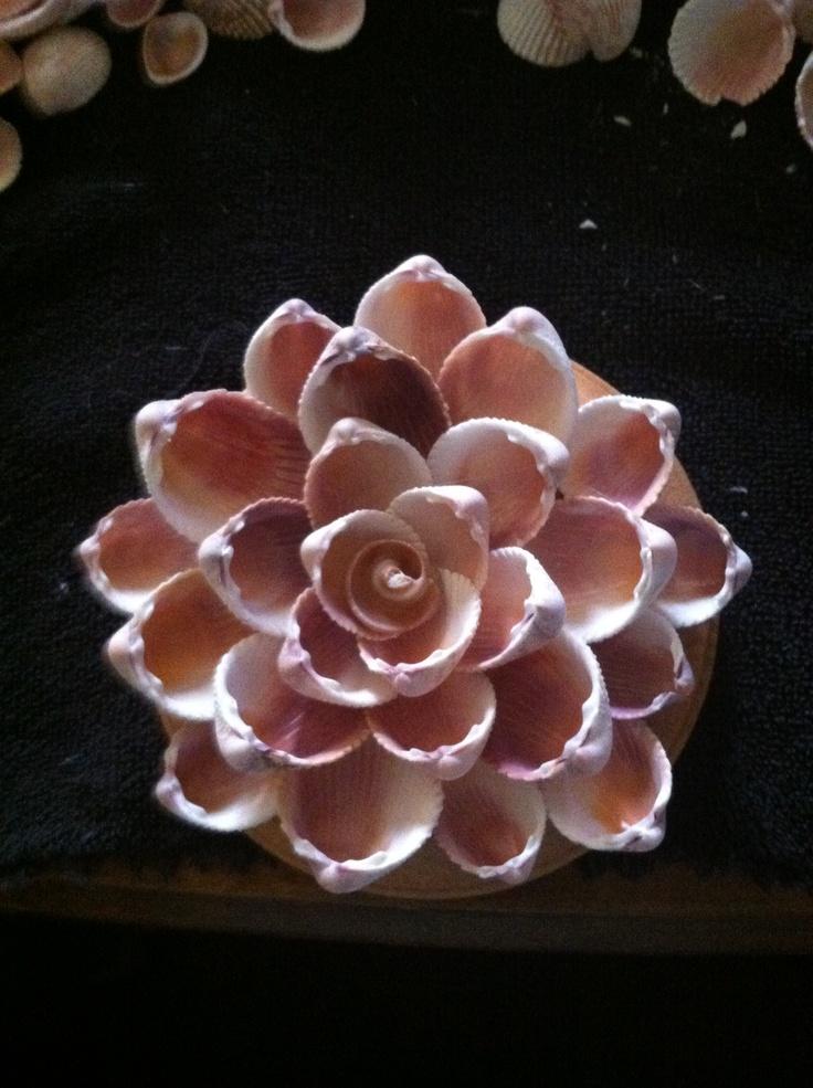 Shell flower.