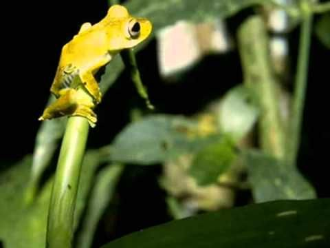 A night in the rainforest (videos for rainforest unit)